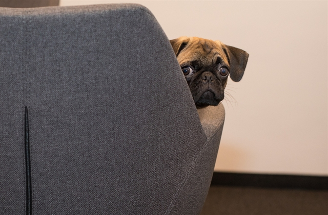 This pug is sorry your page is not available